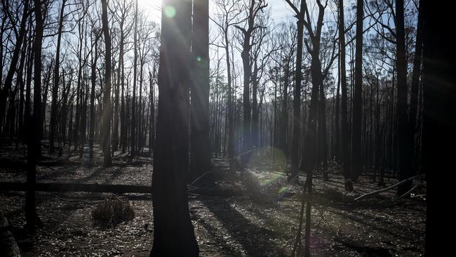 Bushfire ravaged forest in Wairewa, where blazes have destroyed half of the tiny farming hamlet. Picture: Getty Images