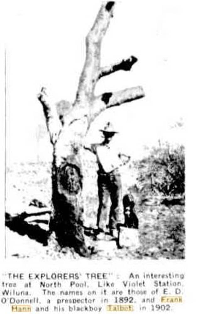 Hann scratched his initials on trees throughout the outback including this one at Wiluna which has the names of Hann and 'his blackboy Talbot' inscribed.