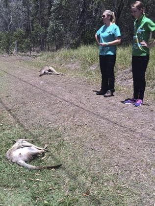 Picture: AAP Image/Michael Beatty, RSPCA