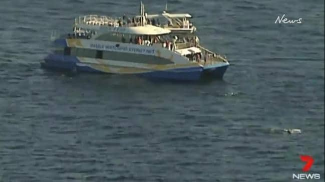 Humpback whale tangled in some netting or ropes about two nautical miles off North Bondi. (7 News Sydney)