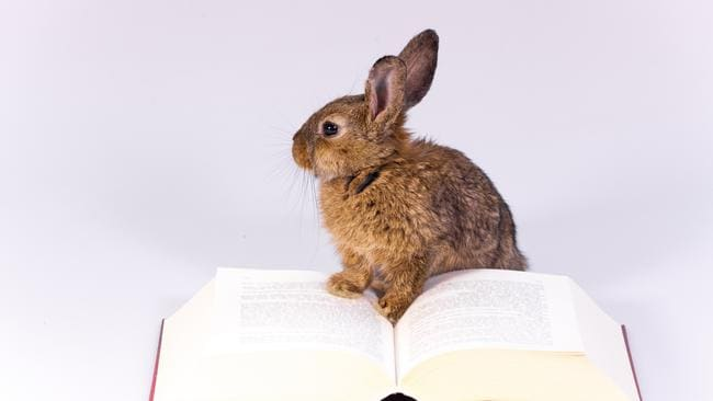 The Easter long weekend is a great time to catch up on reading. Picture: Supplied