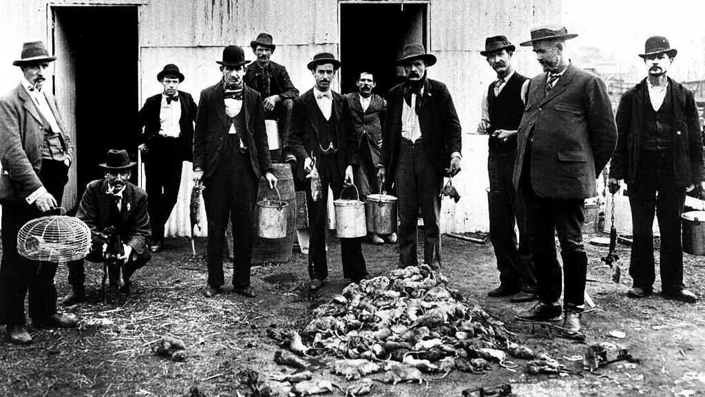 Bubonic Plague Sydney How A City Survived The Black Death In 1900