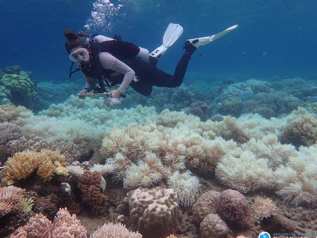 Bleaching damages on the Great Barrier Reef. Picture: AAP