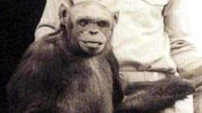 humanchimp hybrid �humanzee� reportedly born in lab 100
