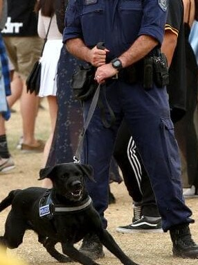 Thousands have hit out at police tactics. Picture: Damian Shaw