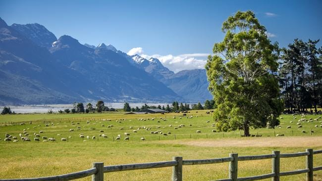 New Zealand is home to more sheep than it is people. Picture: istock
