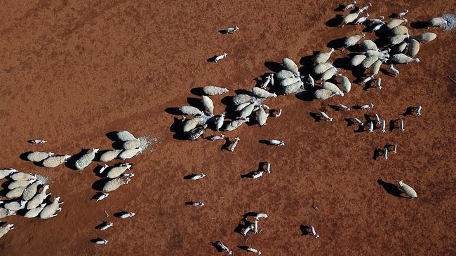 A drought-affected property near Bollon in southwest Queensland. Picture: AAP/Dan Peled