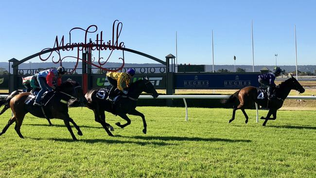 Viddora (right, Joe Bowditch) defeats Mystified and Desert Lashes in a Morphettville trial on Thursday. Picture: Supplied