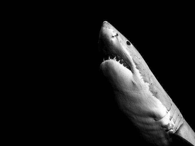 "Matt says he wants to ""replace fear with fascination"" when it comes to sharks like this. Picture: Matt Draper"