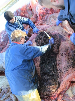 The rubbish was removed as part of the autopsy. Picture: Scottish Marine Animal Strandings Scheme