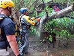 Search and rescue crew members clears a fallen tree over a road during a search mission as hurricane Irma hits Puerto Rico in Fajardo on September 6,2017. Picture: AFP PHOTO / Ricardo ARDUENGO