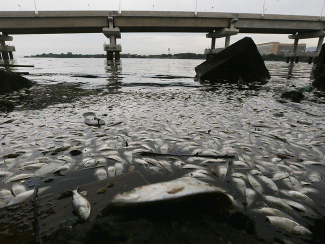 Dead fish are seen floating on the edge of Guanabara Bay last year. The polluted bay receives a majority of the city's raw sewage and officials have recently admitted their clean-up goals won't be met in time for the Olympics. Picture: Mario Tama