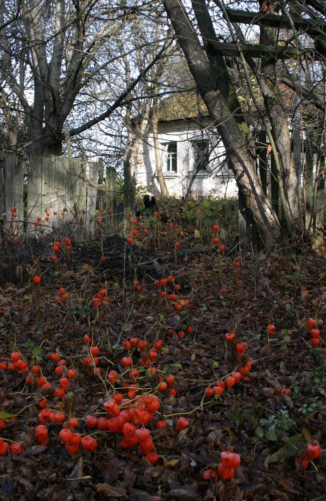 A bear track leads to an abandoned farmstead in a sea of red lantern flowers. Picture: Supplied. Source: Robert Maxwell