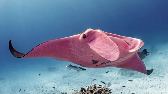 It's still unknown what causes the pink colour. Picture: Kristian Laine / Magnus News