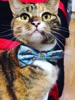 20/03/2019 - Lady Teaspoon is my cat and she loves wearing scarfs! Picture: Chantelle Allatt