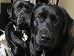 "Bella and Bess: ""We will stalk you until you feed us."" Picture: Sally Parsons"