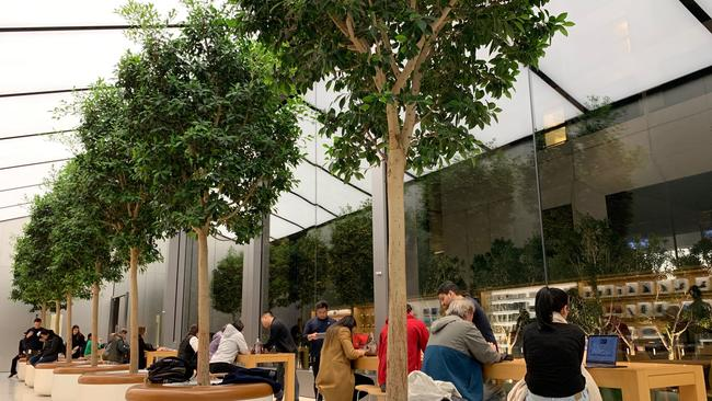 The new Genius Grove at an Apple store in San Francisco. Picture: Benedict Brook.
