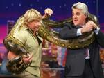 "Steve Irwin (L) wrapping an anaconda snake around Jay Leno on TV show ""The Tonight Show with Jay Leno"" in 2003."