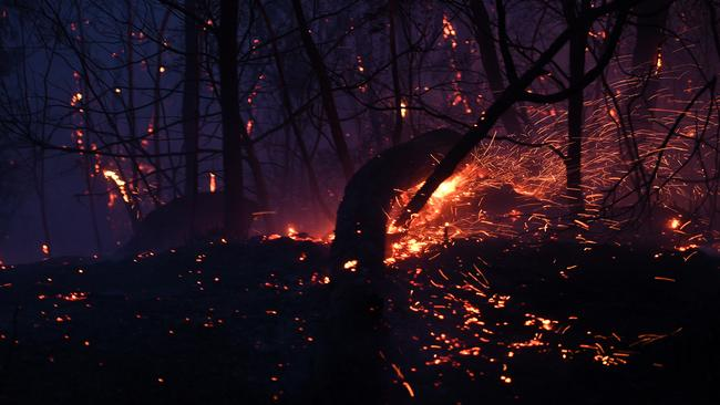 Embers are seen from a burning tree as a bushfire burns close to homes on Railway Parade in Woodford NSW, Friday. Picture: AAP/Dan Himbrechts