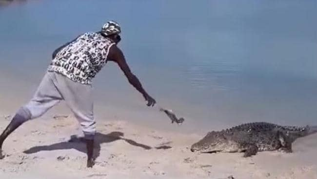 25a1dd08f The saltwater croc named Nike at Bawaka homeland in East Arnhem Land is  being treated as