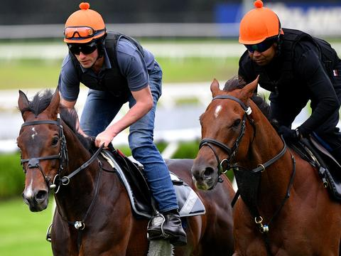 International racehorses Young Rascal (left) and Addeybb take part in trackwork at Canterbury Park Racecourse in Sydney, Tuesday, April 7, 2020. The pair trained by English trainer William Haggas will be racing in the Sydney Cup and Queen Elizabeth Stakes respectively, this Saturday during The Championships Day 2 at Royal Randwick Racecourse. (AAP Image/Dan Himbrechts) NO ARCHIVING