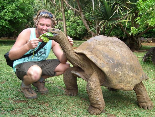 Feeding a giant tortoise.