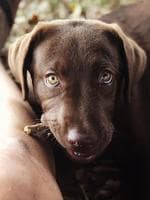 Little Hugo is nailing those puppy dog eyes. Picture: Harewiki Cooper