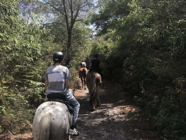 There may not be any better way to discover the Byron Bay forest. Picture: Zephyr Horse Riding