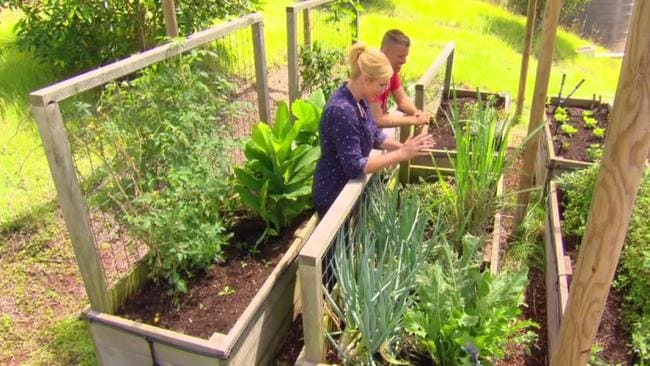 Pete Evans grows his own herbs and vegetables.