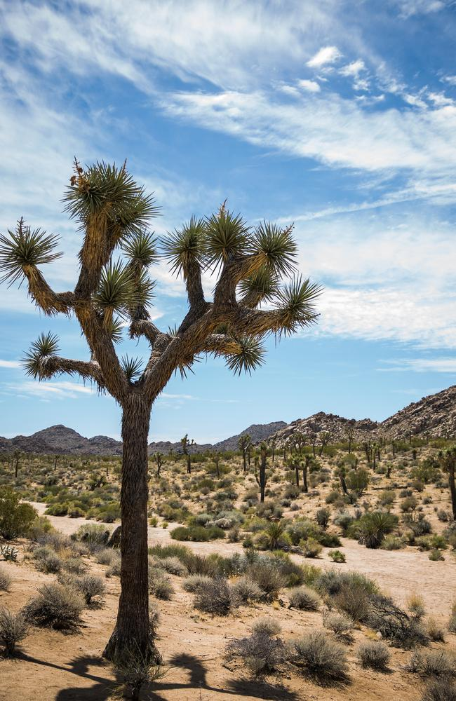 Leaving Coachella was bittersweet ... but the road trip back to LA can take you through the spiritual Joshua Tree National Park. Picture: Max Whittaker