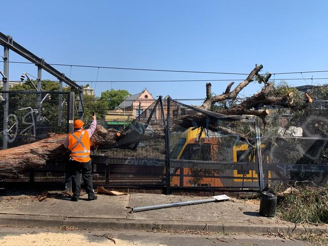The tree fell onto overhead wires after being hit by a truck. Picture: Sydney Trains