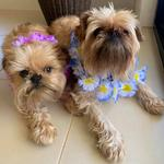 Tessie (L) and Chewie (R). Photo Karen Bannister