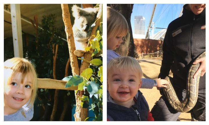 Why you need to get totally wild with the kids at Wild Life Zoo