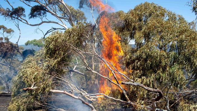 The Hepburn Springs bushfire continues to blaze. Picture: Jay Town