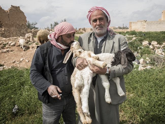 Mustafa is a shepherd who cares for the sheep which have been donated to families in the village of Holaya outside Homs. At his left is Ahmed. Picture: Ella Pellegrini