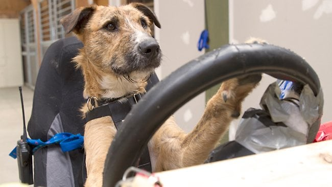 The dogs and their skills will be put to the test in a live broadcast next Monday. Picture: SPCA
