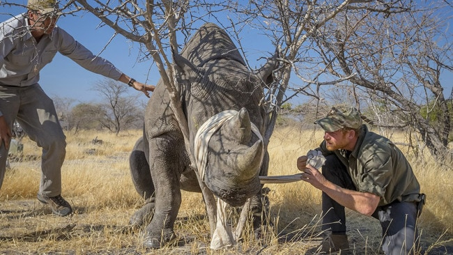 Harry in Botswana helping Rhino Conservation Botswana (Photo by Rhino Conservation Botswana / Kensington Palace via Getty Images)