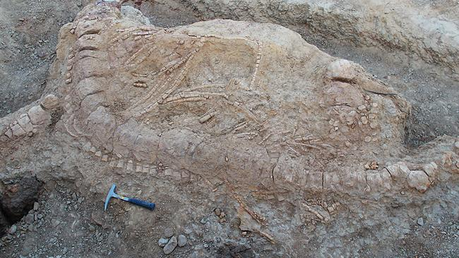 An excavated Ichthyosaur skeleton. Picture: AFP/PLOS One