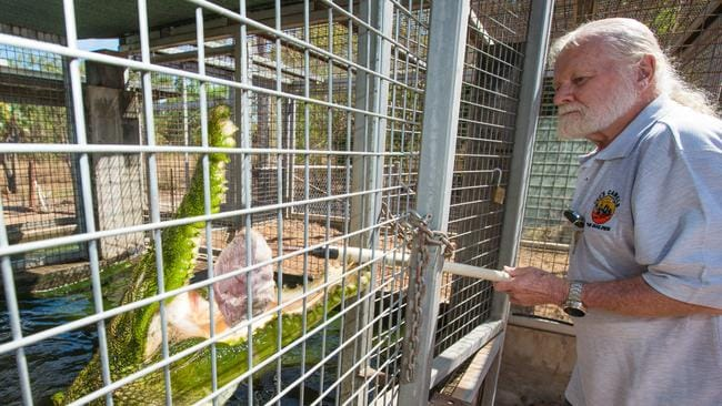 Ted Plevnik feeds his crocodile Boris, who comes with the property for free if potential buyers are interested. Picture: Glenn Campbell