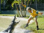 Steve Irwin takes on hungry crocodile at Australia Zoo on the Sunshine Coast in 2003. Picture: Rob MacColl.