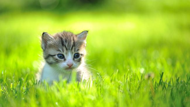 Cat owners, your felines are killers. Keep a leash on them