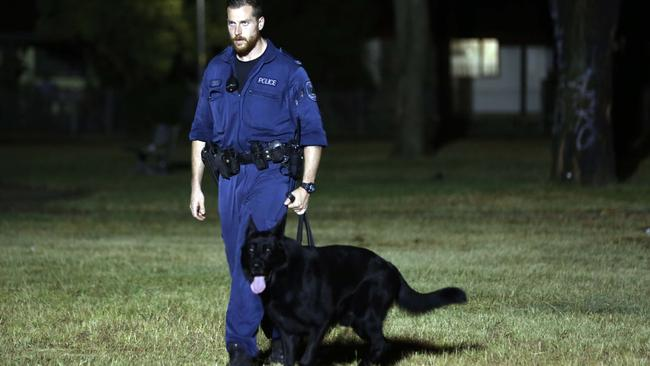 Drug dogs NSW: Why police sniffer dogs do more harm than good
