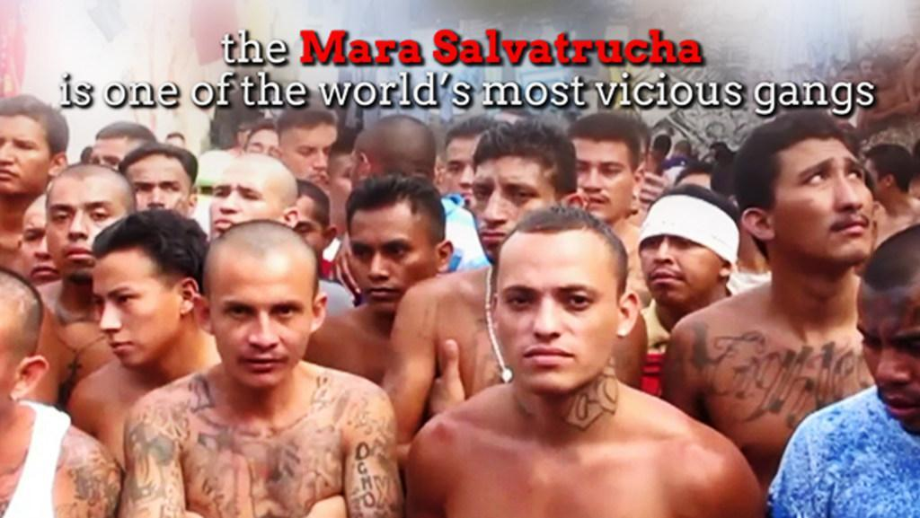 Mara Salvatrucha - One of the World's most vicious gangs