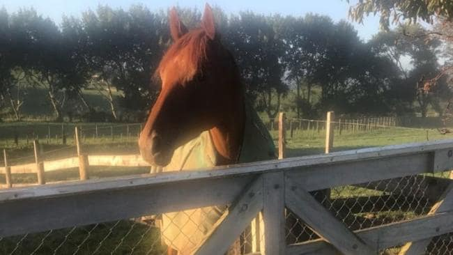 Gingernuts is enjoying lief back home in New Zealand.
