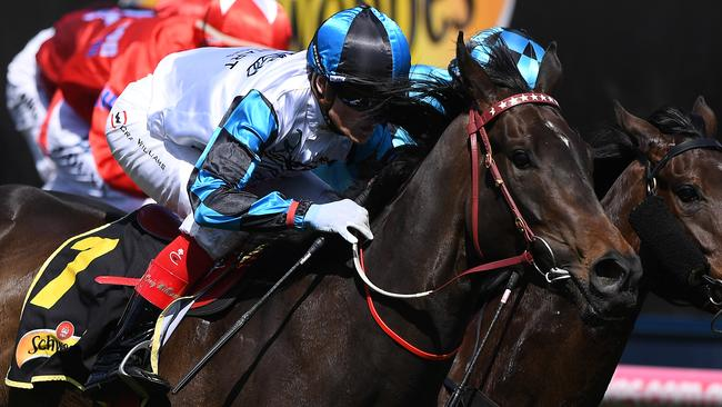 Amphitrite will be out to enhance her All-Star Mile claims in The Vanity at Flemington. Picture: AAP