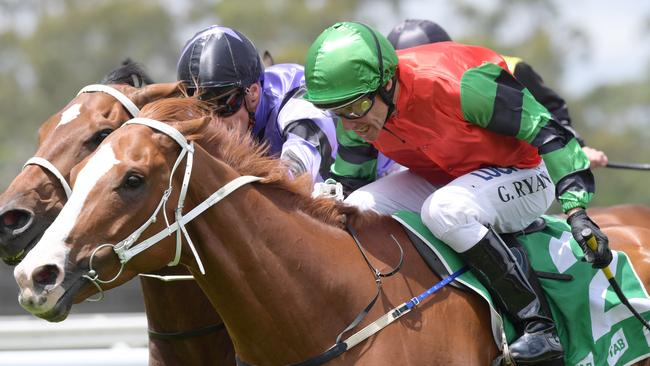 Greg Ryan has a cracking book of rides at Dubbo. Picture: AAP