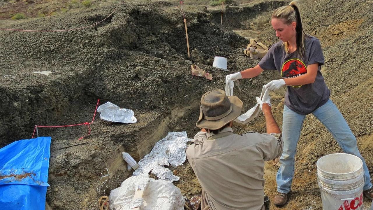 Robert DePalma (left) and field assistant Kylie Ruble excavate fossil carcasses at the site. Picture: AFP