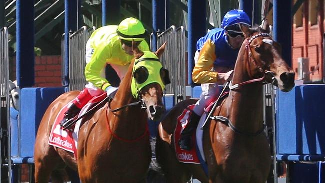 He Or She, left, is chasing a start in the All-Star Mile. Picture: Hamish Blair