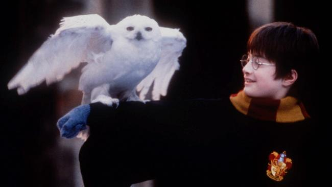 Forget texting your long-lost love. Reach out Harry Potter-style, with an owl.