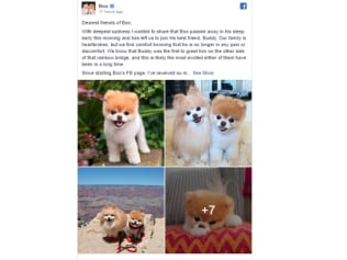 Boo's owner shared the sad news on Facebook